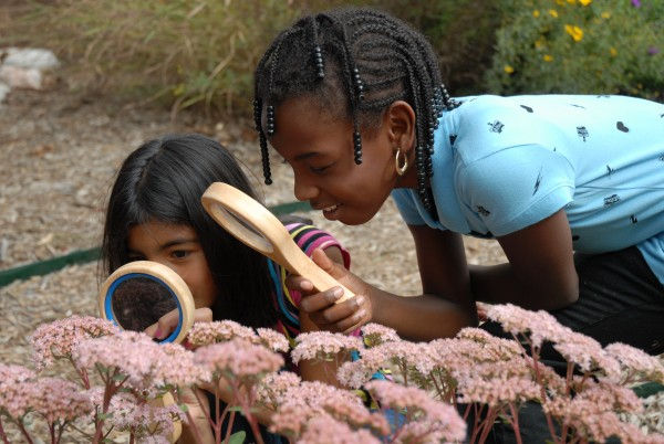 Children explore meadow planting.