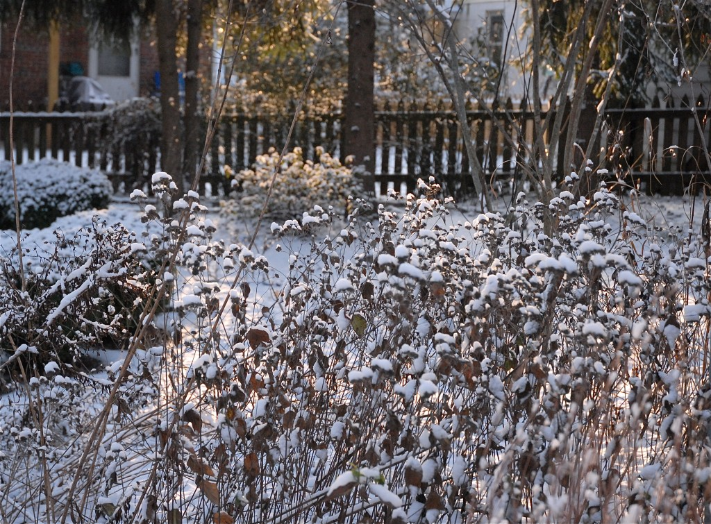 Snow blankets Maryland backyard meadow. Catherine B. Zimmerman