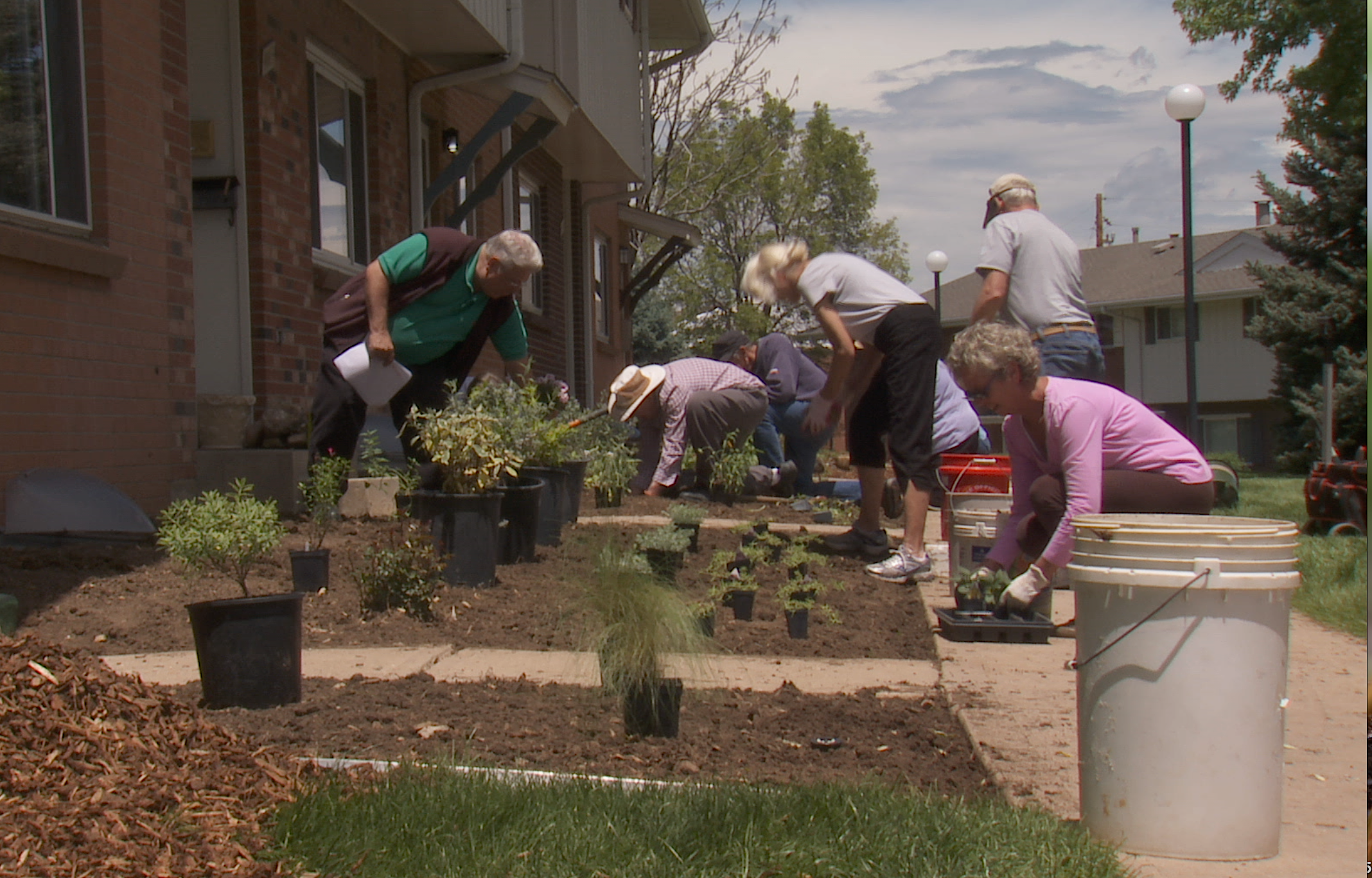 Residents of Cherry Creek 3 volunteer to re-landscape 251 townhome fronts with native and adapted plants.