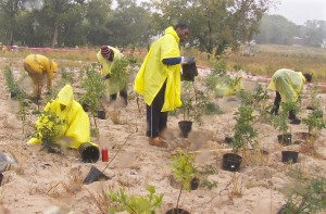 In pouring rain, volunteers plant trees in Soundview Park, Bronx, NY as part of Million TreesNYC.